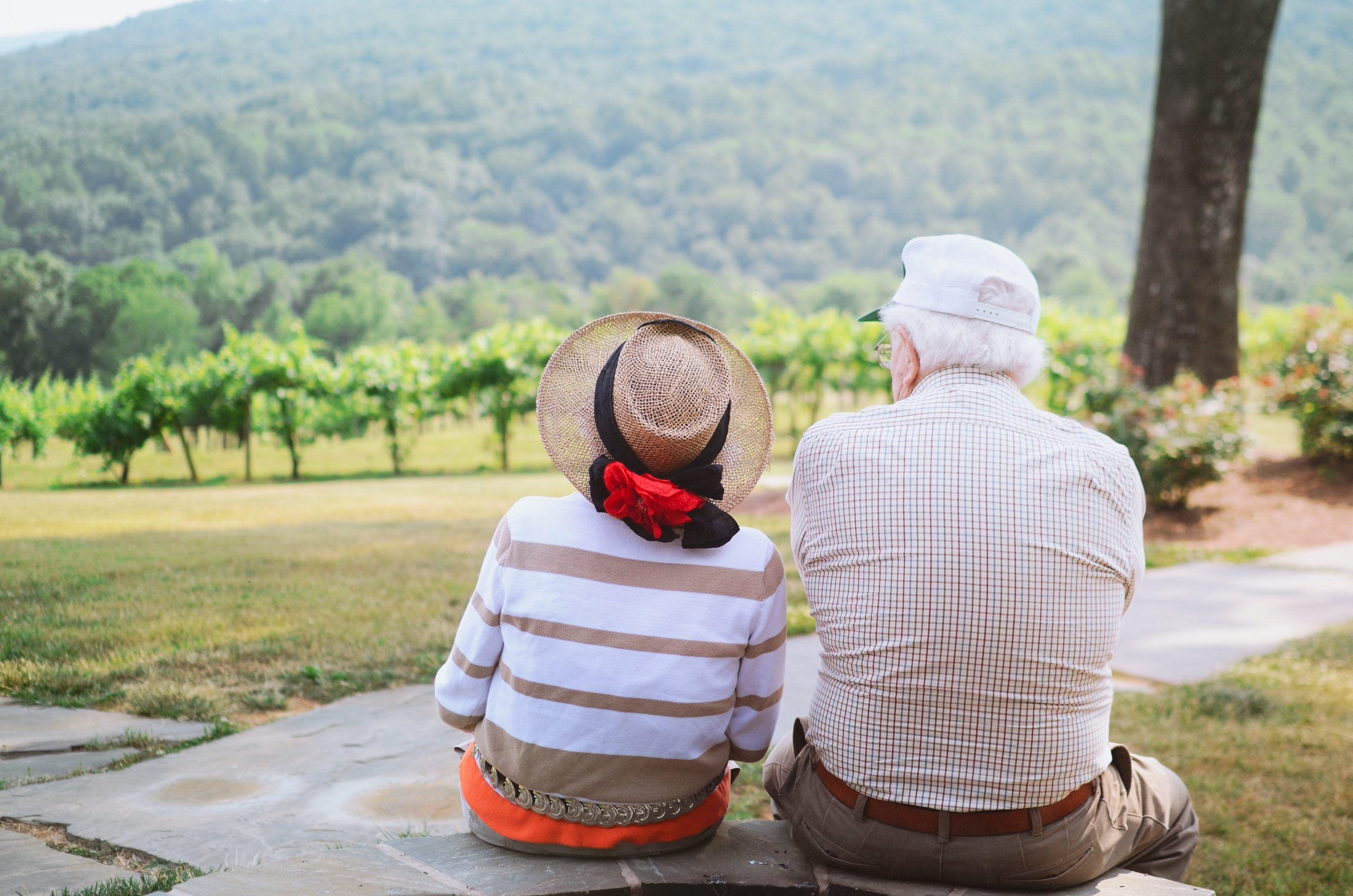 The backs of an elderly couple looking out across a tree filled landscape